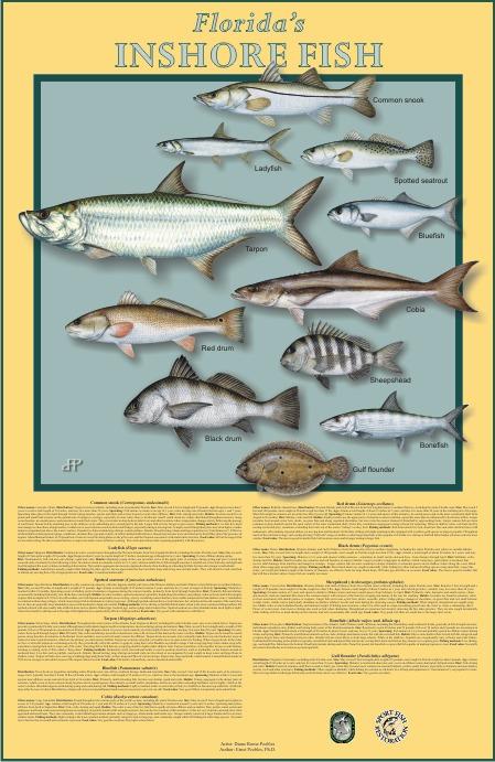 Fish art and coastal landscapes by Diane Peebles
