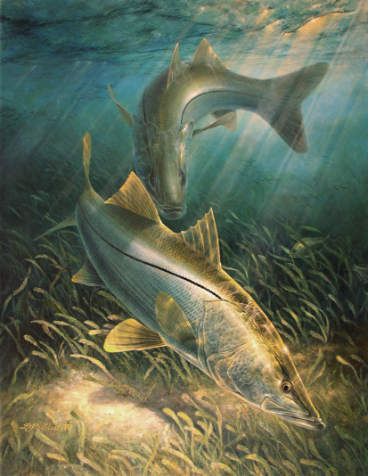 La Pesca del Róbalo (Centropomus sp.) por José Manuel López Pinto / Actualizado a 03 de Noviembre del 2013 TwoSnook_small