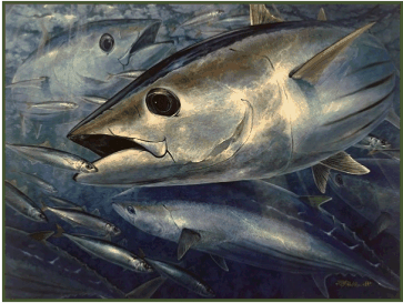From oil painting: Skipjacks and Redtail Scad