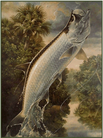 From oil painting: River Tarpon