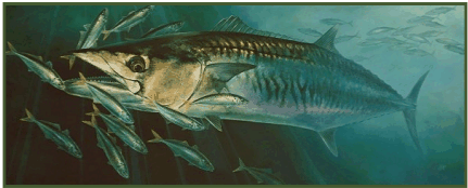 From oil painting: King Mackerel and Round Scad